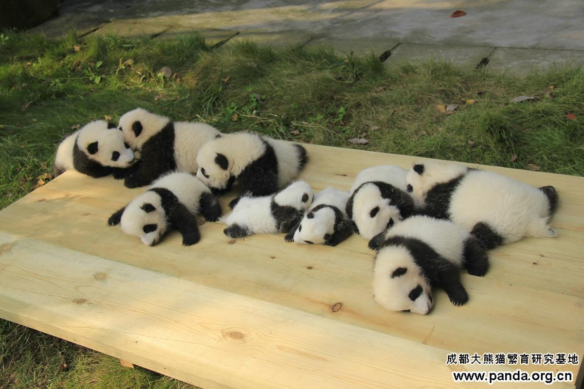 动物我们的朋友儿童画熊猫