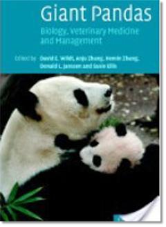 大熊猫d.jpg